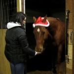Santa Pony