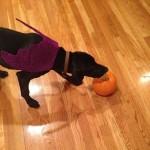 Huckleberry Halloween